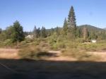 the wild northwest